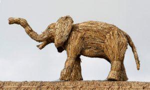 straw-store-elephant-01