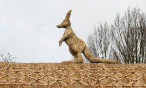 straw-store-kangaroo-01