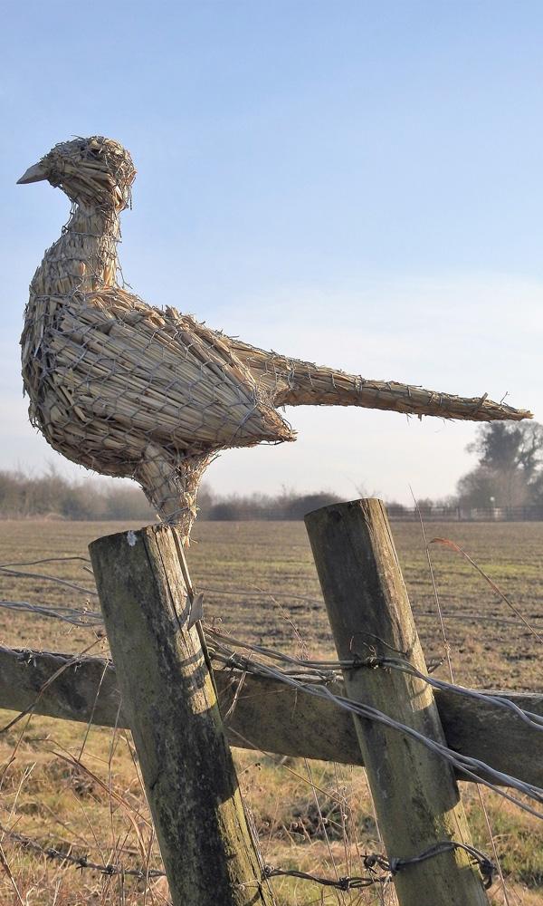 straw-store-pheasant-02