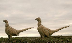 straw-store-pheasants-01