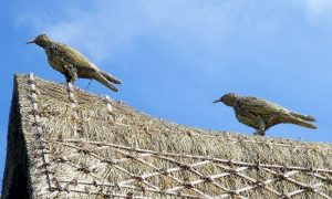 straw-store-ravens-01